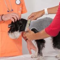Practicas-Curso-Auxiliar-Veterinaria-18