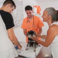Practicas-Curso-Auxiliar-Veterinaria-50