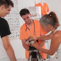 Practicas-Curso-Auxiliar-Veterinaria-53
