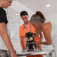 Practicas-Curso-Auxiliar-Veterinaria-55