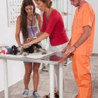 Practicas-Curso-Auxiliar-Veterinaria-65