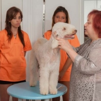 Practicas-Curso-Peluqueria-Canina-23-580x385
