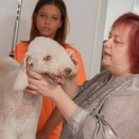 Practicas-Curso-Peluqueria-Canina-24-580x385