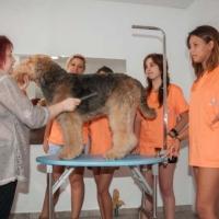 Practicas-Curso-Peluqueria-Canina-28-580x385