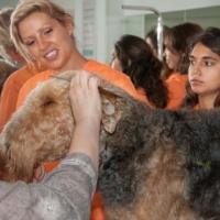 Practicas-Curso-Peluqueria-Canina-29-580x385