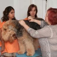 Practicas-Curso-Peluqueria-Canina-31-580x385