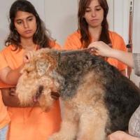 Practicas-Curso-Peluqueria-Canina-39