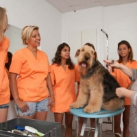 Practicas-Curso-Peluqueria-Canina-44-580x385