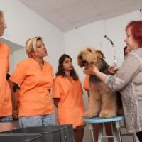Practicas-Curso-Peluqueria-Canina-45-580x385