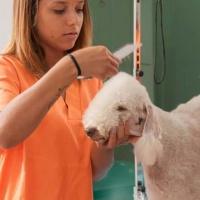 Practicas-Curso-Peluqueria-Canina-60