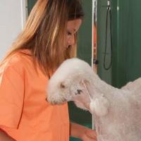 Practicas-Curso-Peluqueria-Canina-61