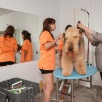 Practicas-Curso-Peluqueria-Canina-69-580x385