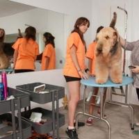 Practicas-Curso-Peluqueria-Canina-70-580x385