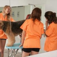 Practicas-Curso-Peluqueria-Canina-71-580x385