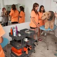 Practicas-Curso-Peluqueria-Canina-73