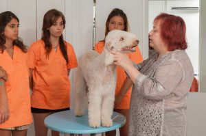 Prácticas Curso Peluquería y Estética Canina 23