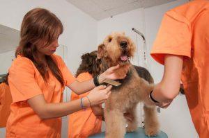 Prácticas Curso Peluquería y Estética Canina 67