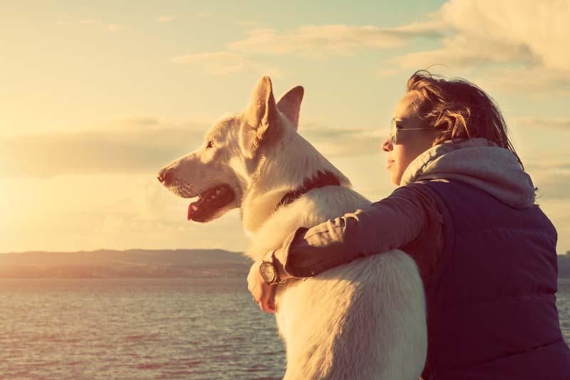 Viajar y mascotas, ¿mala combinación?