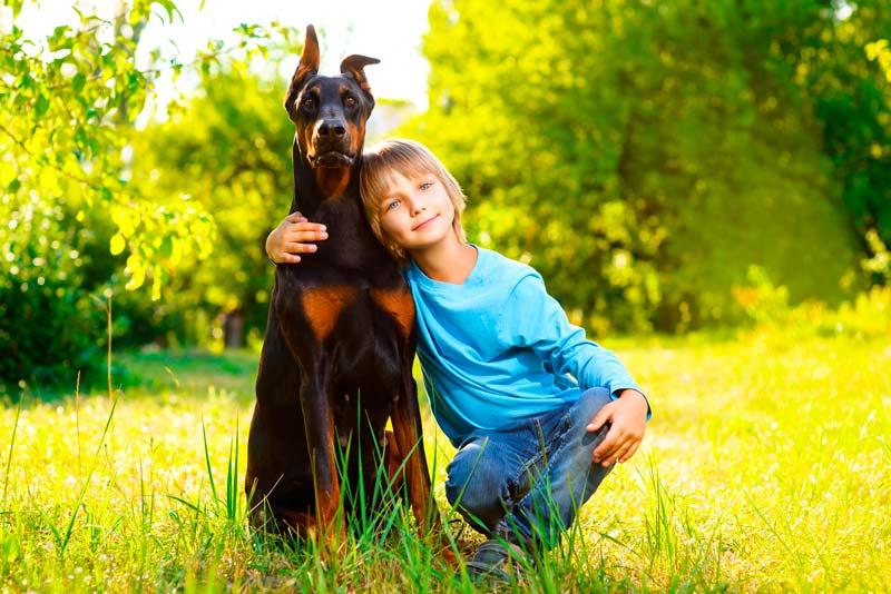 La vuelta al cole afecta a nuestro perro | Curso Veterinaria en Barcelona