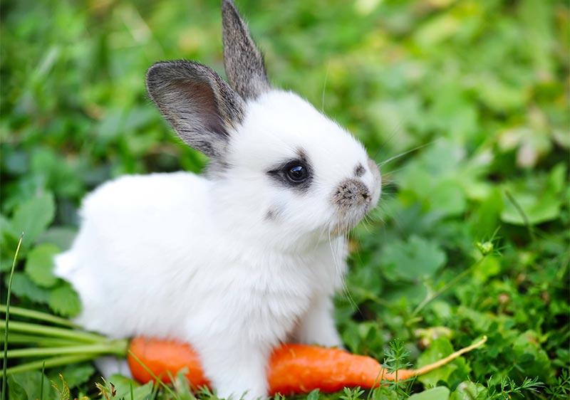 Nuevas mascotas: El conejo - TOP aul@ Salud