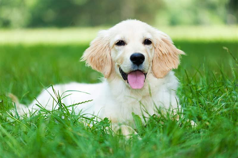 La sonrisa de tu mascota - TOP aul@ Salud Veterinaria