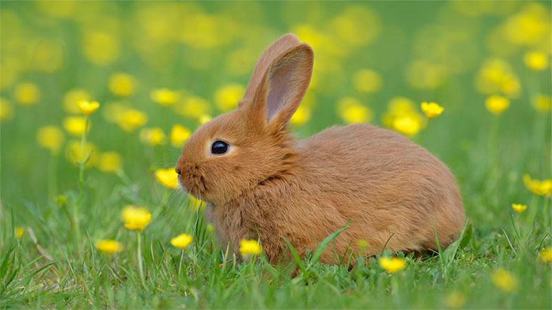 ¿Los Conejos son roedores? - TOP aul@ Salud