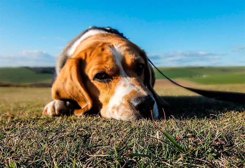 ¿Pueden padecer cáncer nuestros animales? TOP aul@ Salud