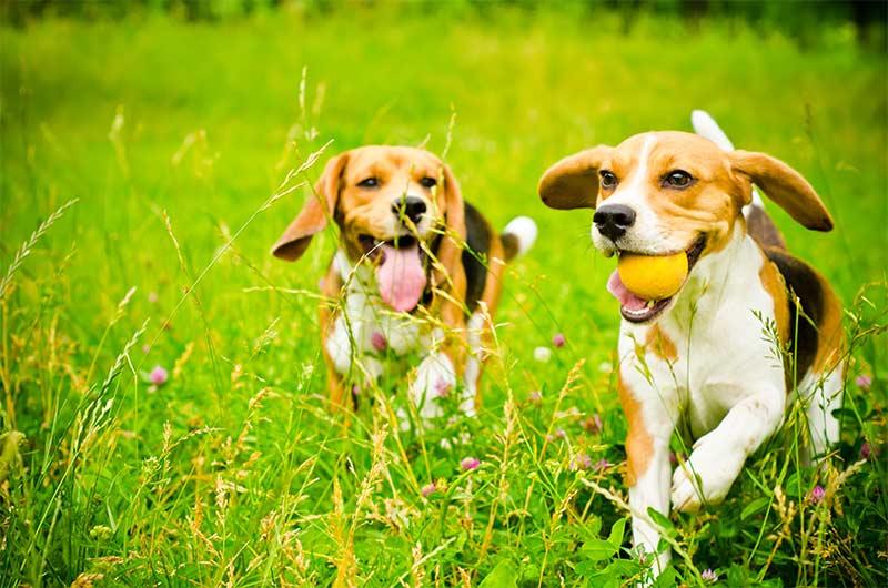 ¿Bebidas energéticas para perros? TOP aul@ Salud