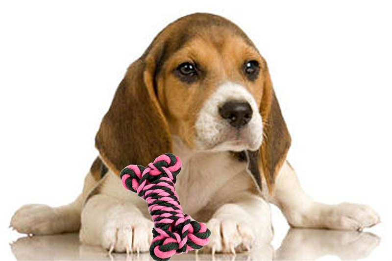 ¿Que juguete le compro a mi mascota? TOP aul@ Salud