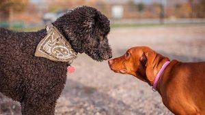 Como se comunican los animales - TOP aul@ Salud