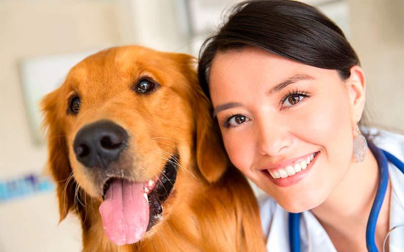 Contra que enfermedades vacunar a mi perro - TOP aul@