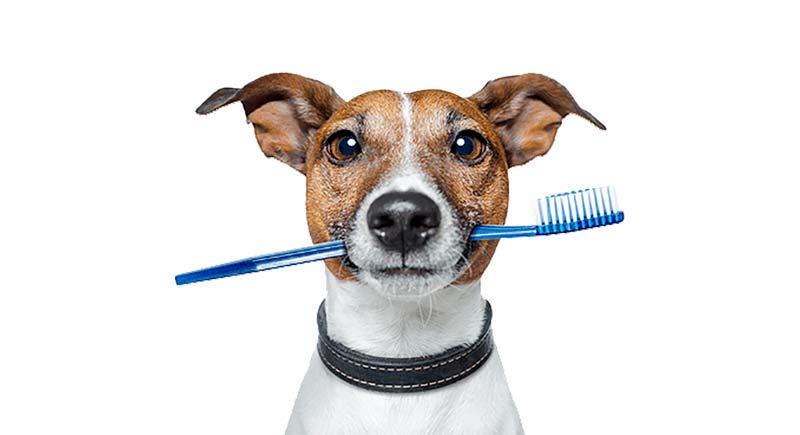 limpiar los dientes a los perros - TOP aul@ Salud