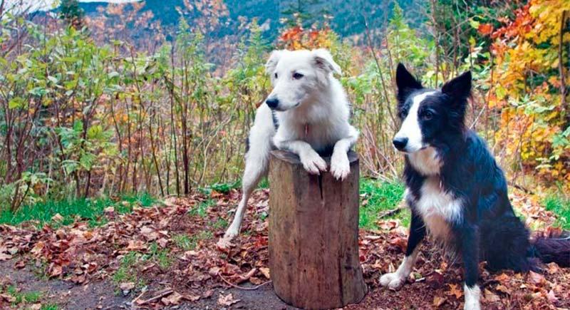 ¿Puedo hacer senderismo con mi perro? TOP aul@ Salud