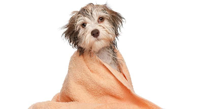 4 Motivos por los que mi perro se puede rascar - TOP aul@ Salud