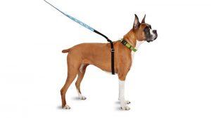 Collar, arnés y correas para tu perro - TOP aul@ Salud