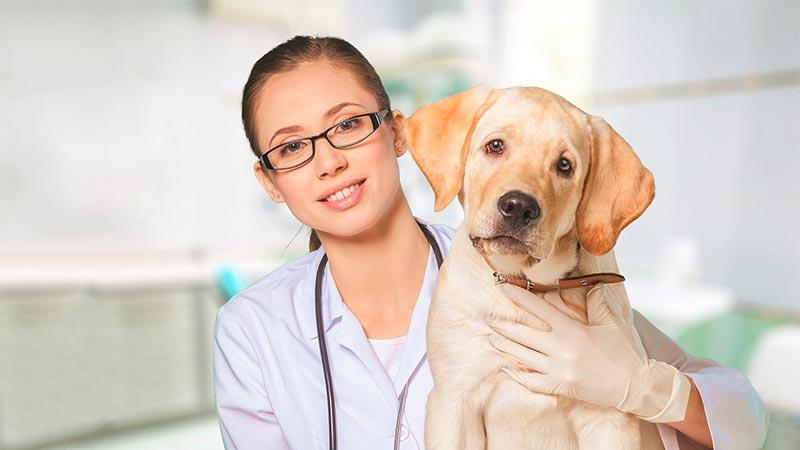 ¿Mi perro tiene alergia? - TOP aul@ Salud