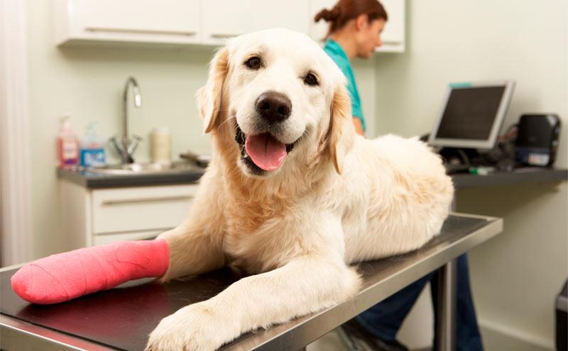 6 consejos si tu mascota sufre una fractura - TOP aul@ Salud