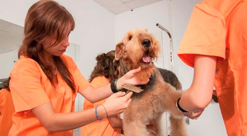 Peluquería y Estética Canina Profesional en Barcelona - TOP aul@ Salud