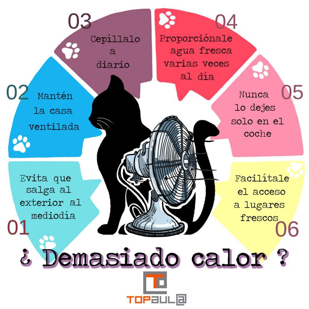 Infografía ¿Qué puedo hacer si mi gato tiene demasiado calor? - www.topaulasalud.com