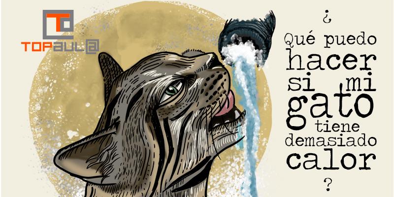 ¿Qué puedo hacer si mi gato tiene demasiado calor? - www.topaulasalud.com