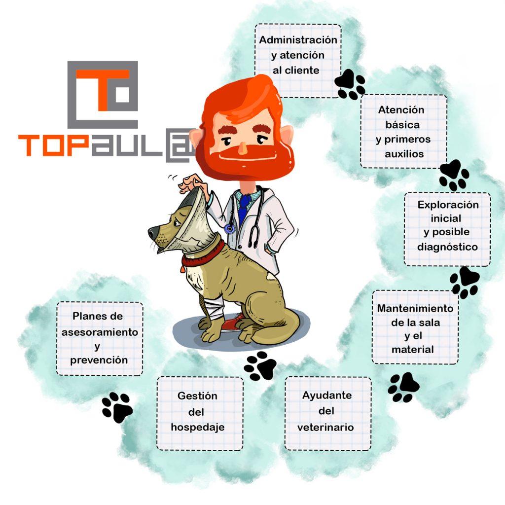 Auxiliar Técnico Veterinario ¿Cuáles son sus funciones y salidas profesionales? - www.topaulasalud.com