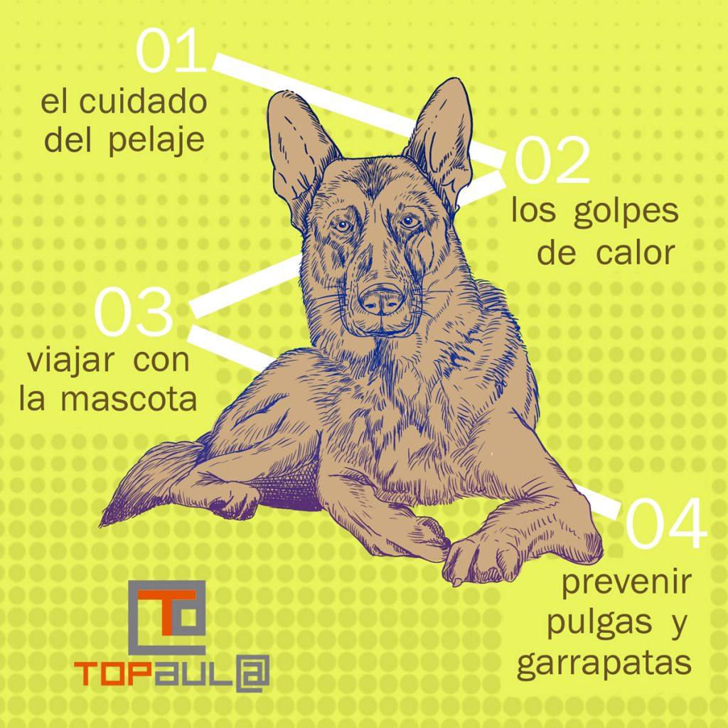 Infografía ¿Cuáles son las consultas más frecuentes al veterinario en verano? - www.topaulasalud.com