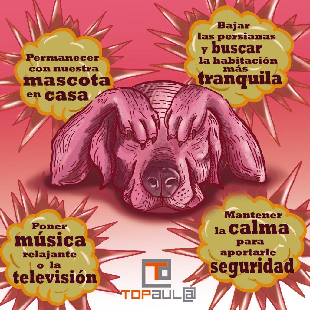Infografía ¿Qué puedo hacer si a mi mascota le asustan los petardos? - www.topaulasalud.com