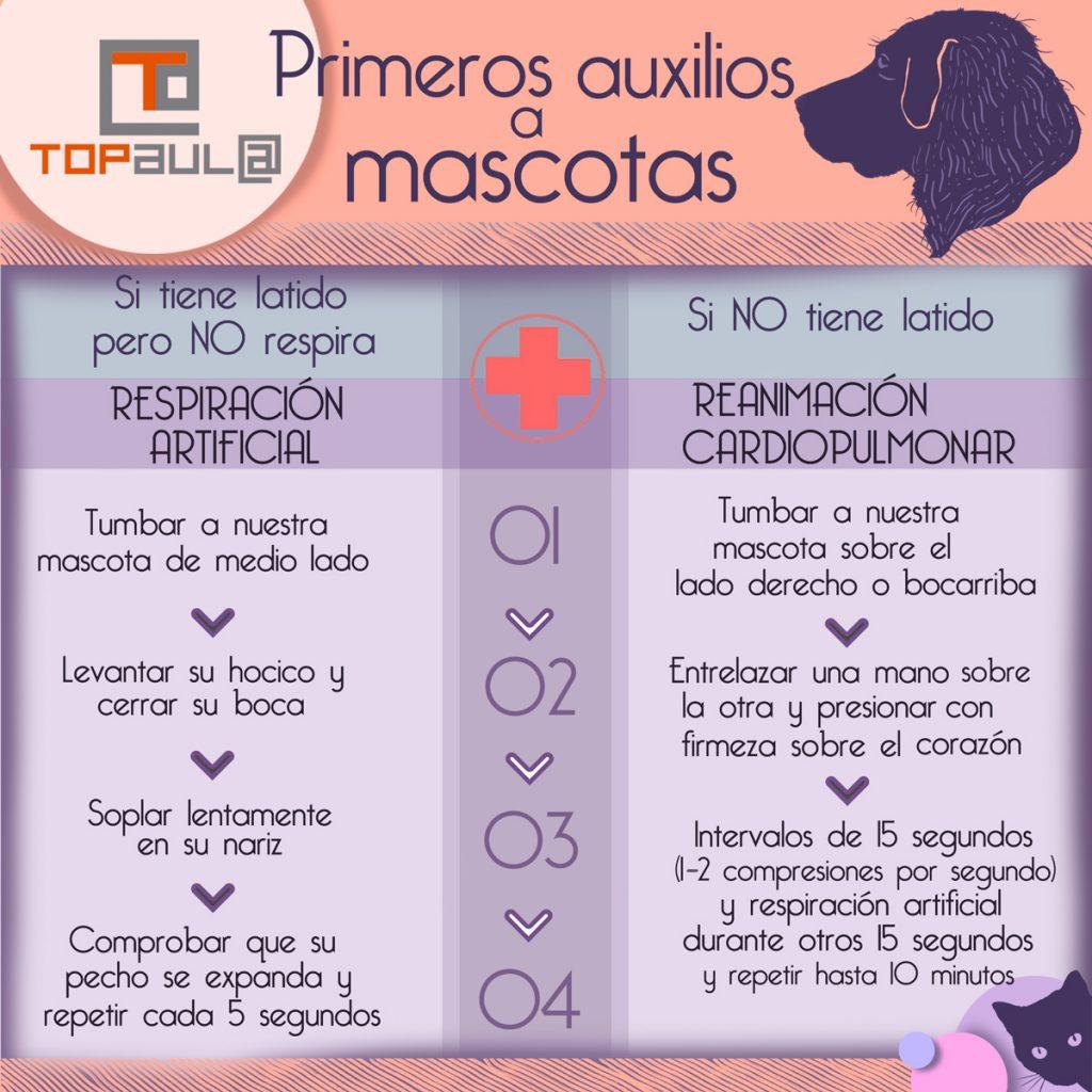 Infografía ¿Le podríamos practicar primeros auxilios a nuestra mascota? - www.topaulasalud.com