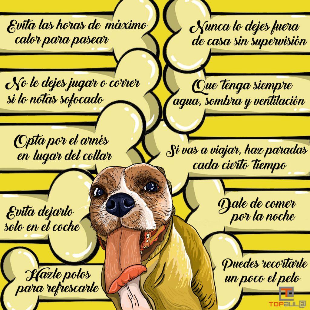 Infografía ¿Cómo evitar que nuestro perro sufra un golpe de calor? - www.topaula.com