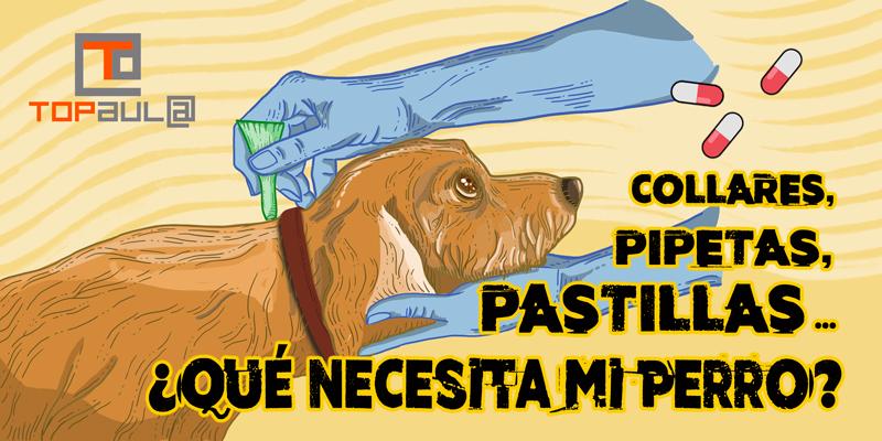 Collares, pipetas, pastillas... ¿Qué necesita mi perro? - www.topaulasalud.com