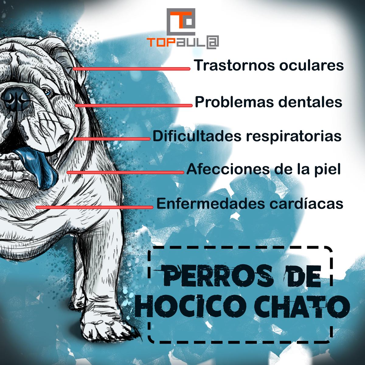 Infografía Problemas de salud que sufren los perros de hocico chato - www.topaulasalud.com