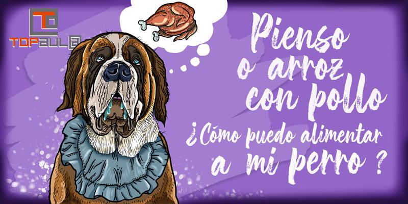 Pienso o arroz con pollo: ¿Cómo puedo alimentar a mi perro? - www.topaulasalud.com