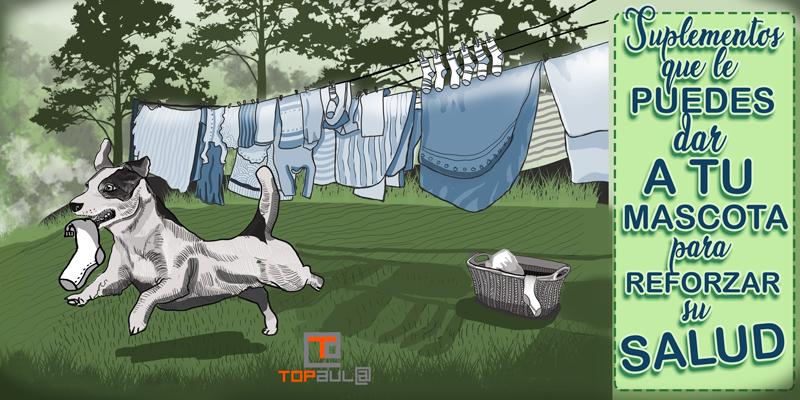 Suplementos que le puedes dar a tu mascota para reforzar su salud - www.topaulasalud.com