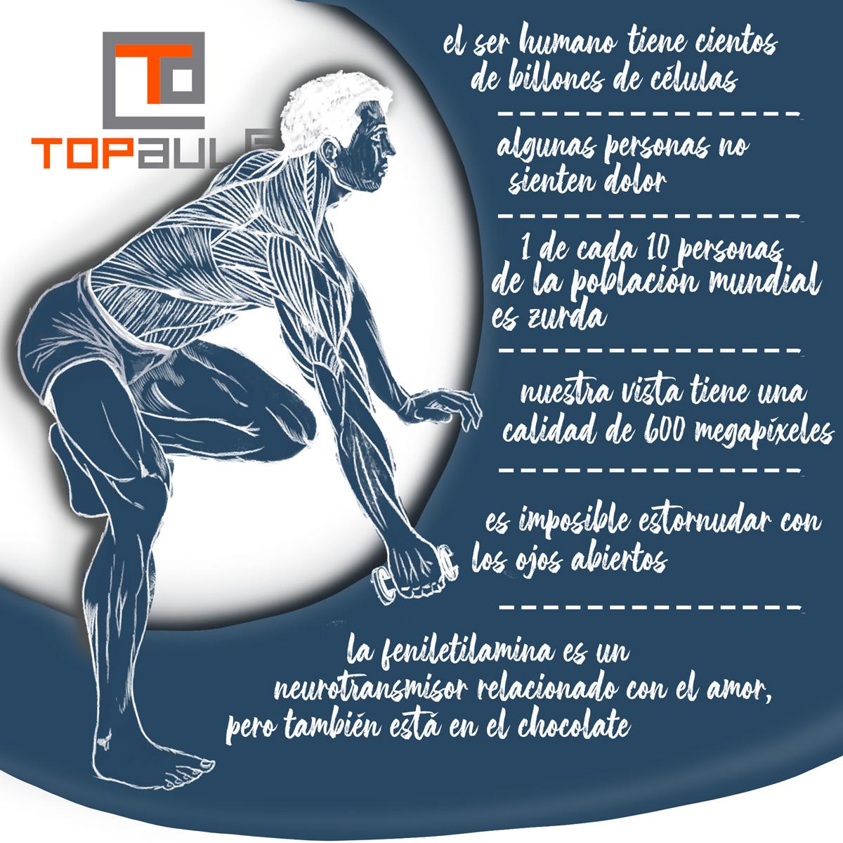 Infografía Curiosidades del cuerpo humano que no conocías - www.topaula.com